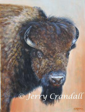 Too Close for Comfort, Buffalo portrait original oil-0